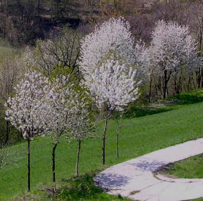 alberi-primavera3.jpg
